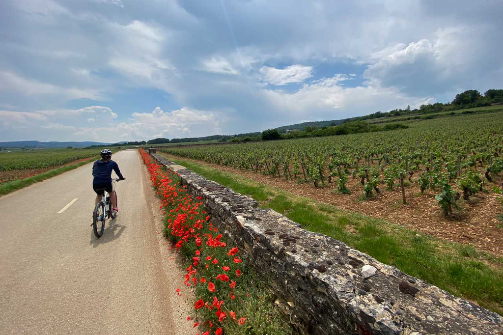 Voie des Vignes Radroute durch Weinberge Burgunds
