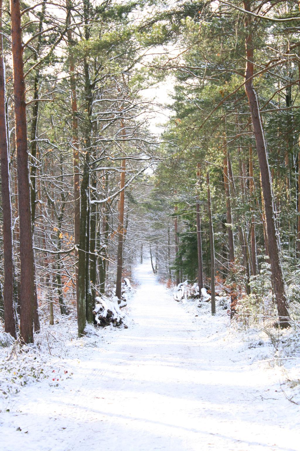 Weiße Weihnachten und eine bezaubernde Schneelandschaft.