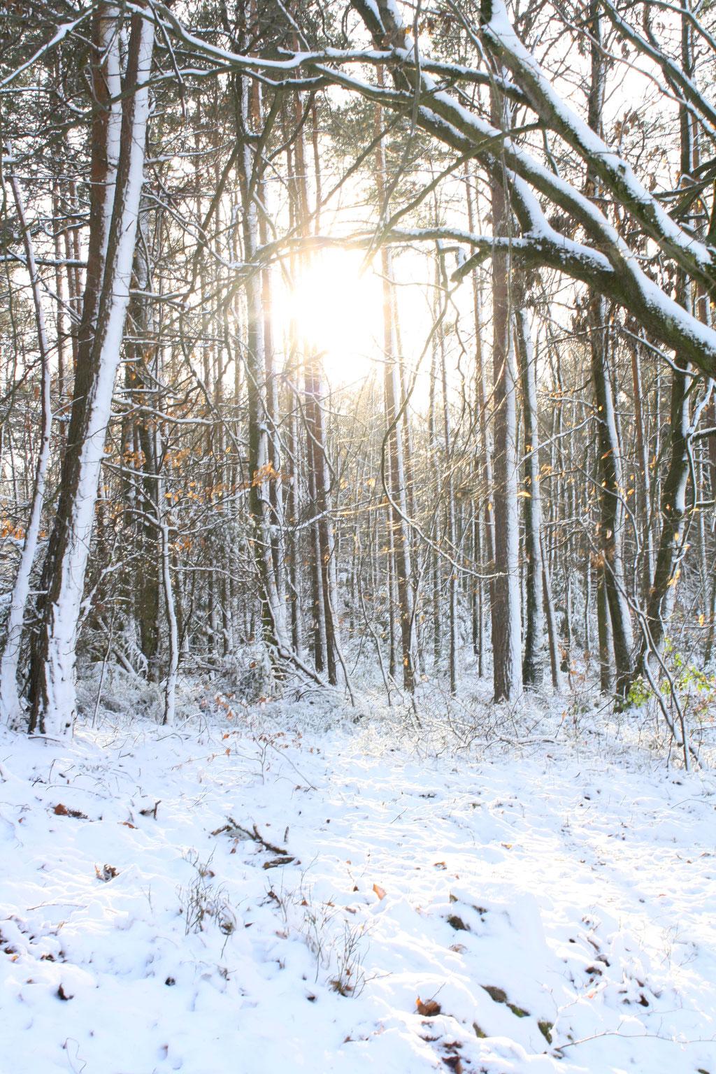 Schneelandschaft im verschneiten Wald.