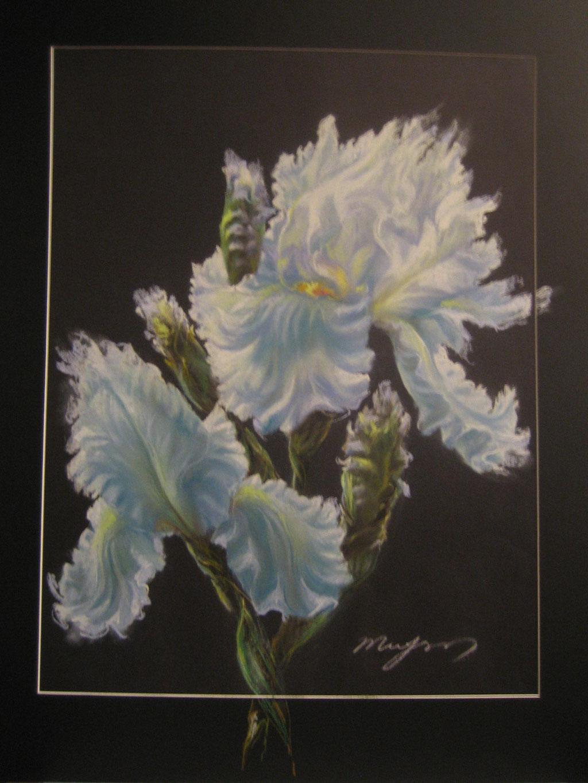 Iris 50x70