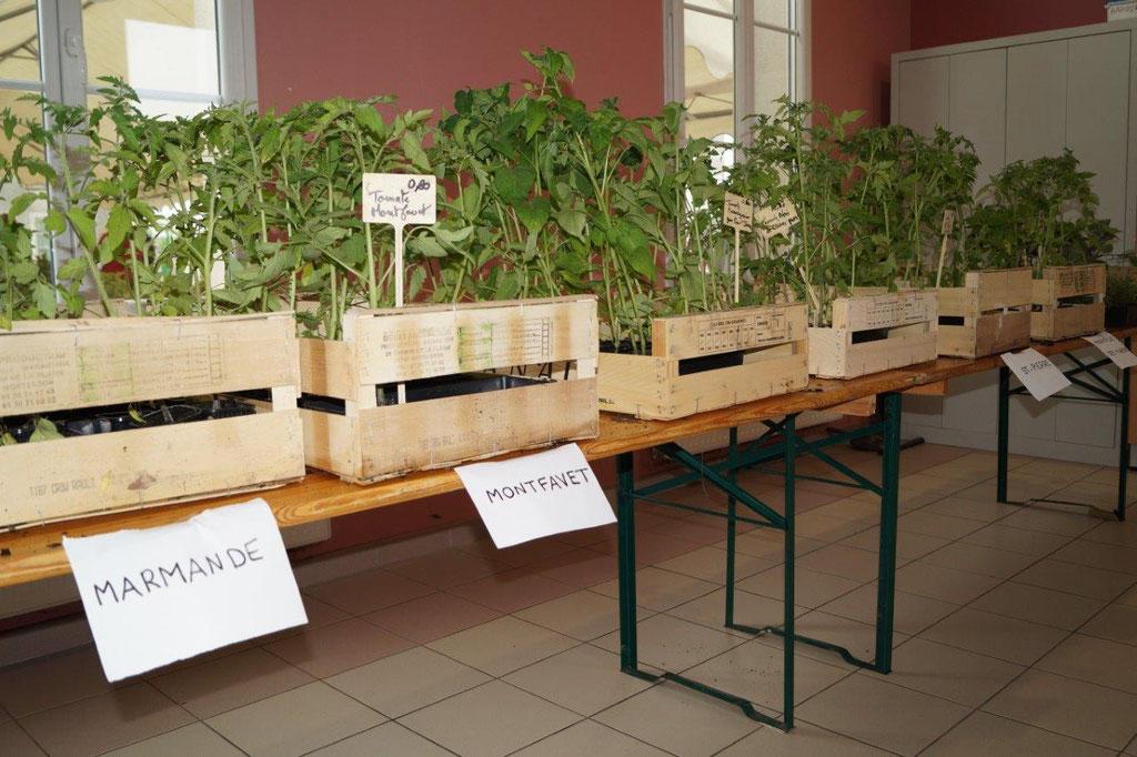 Les fleurs, et ici les plants pour le potager, provenaient de Fontenelle-en-Brie, commune de Dhuys-et-Morin-en-Brie (horticulteur Jean-Louis Suquet).