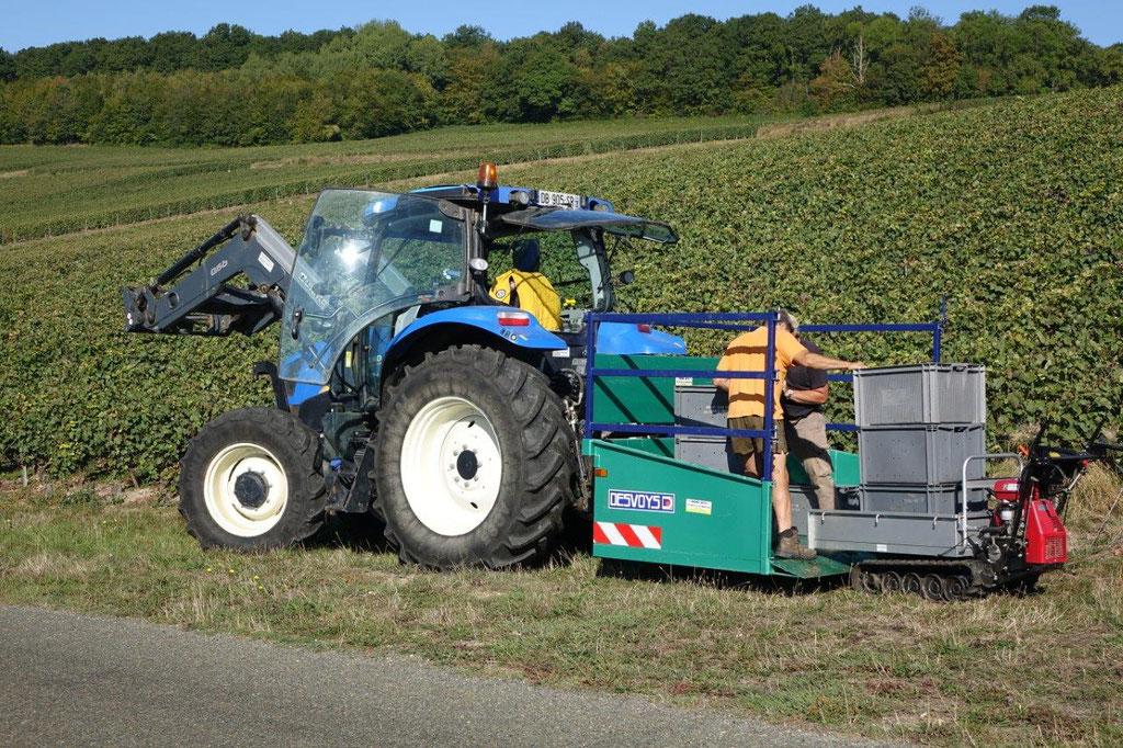 """Les caisses de raisin sont déchargées du chenillard, puis empilées dans le """"bénon"""" avant le transfert vers le pressoir."""
