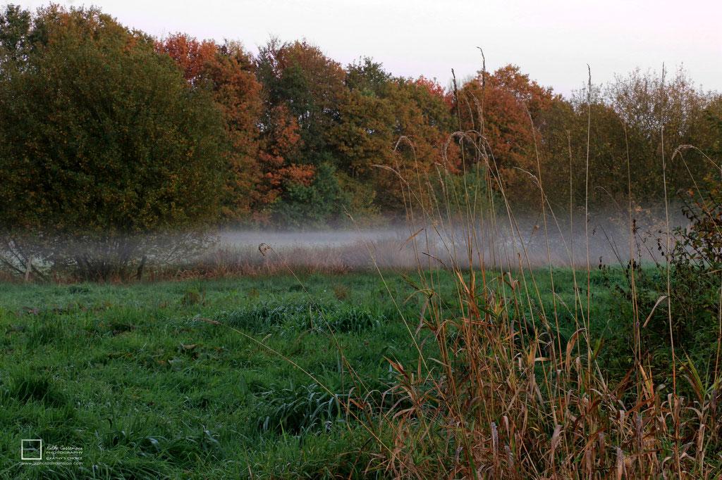Mist in een weide met op de achtergrond een bomenrij.