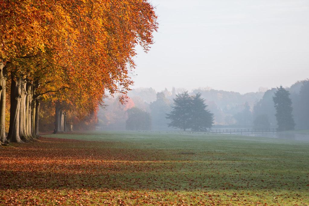 Herfstlandschap met links een bomenrij met koperen bladkleuren.