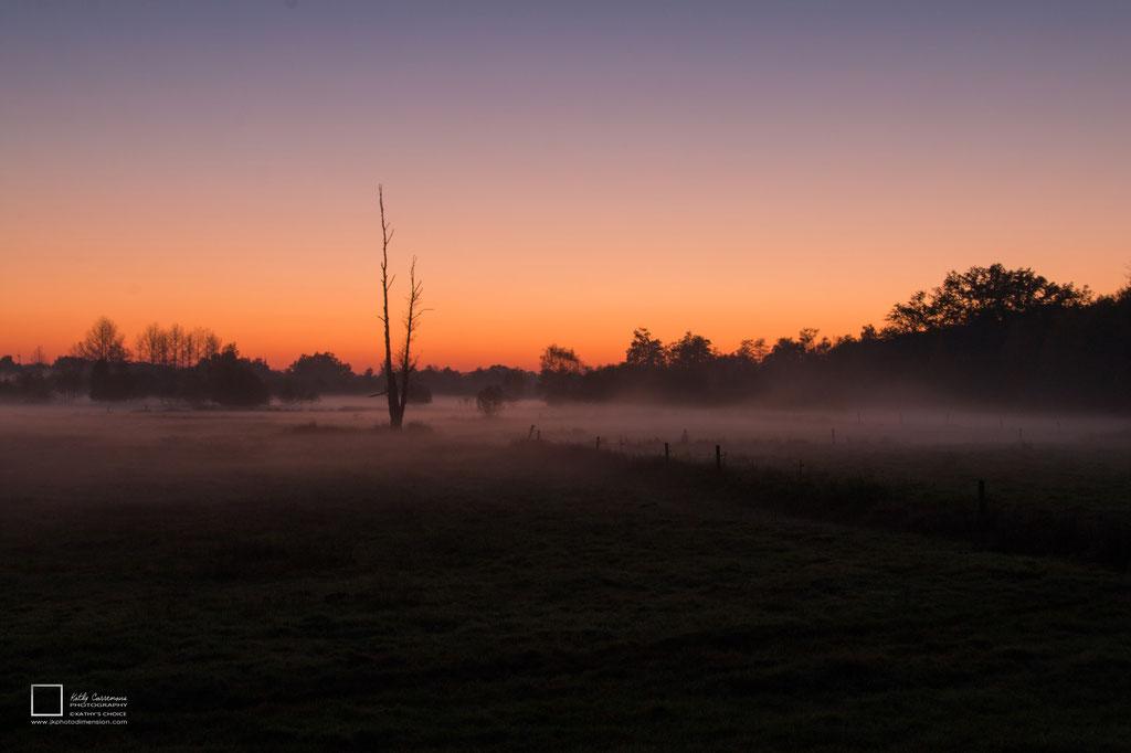 Opgaande zon in de herfst met een weidelandschap en op de verre achtergrond  een bos.