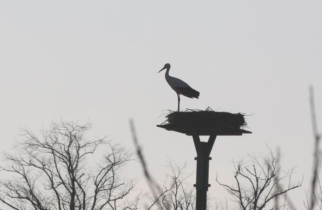 Der Storch ist auch schon da