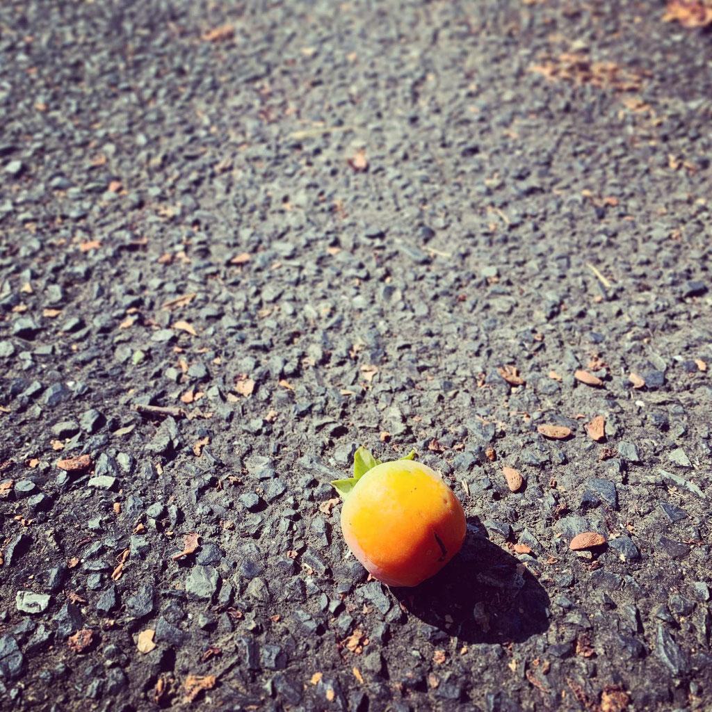 柿生の道端にころんと禅寺丸