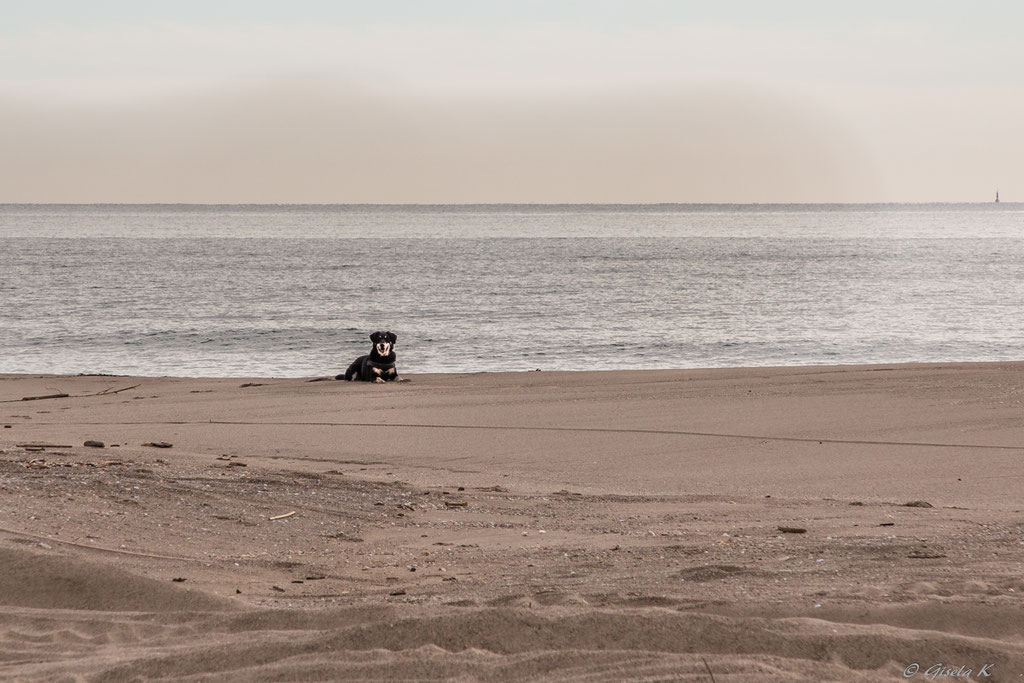 Nicki möchte am Meer bleiben.