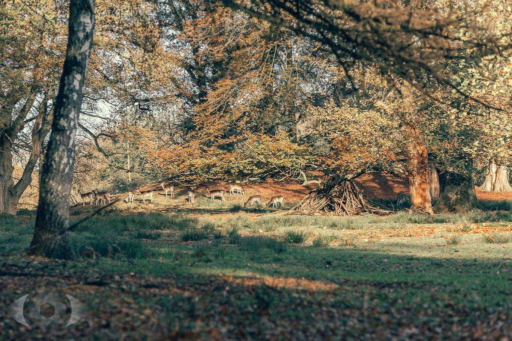 Wildpark Dülmen - Landschaftsfotografie - Naturfotografie - Naturpark Hohe Mark- Münsterland