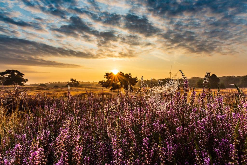 Westruper Heide - Landschaftsfotografie - Naturfotografie - Naturpark Hohe Mark - Haltern