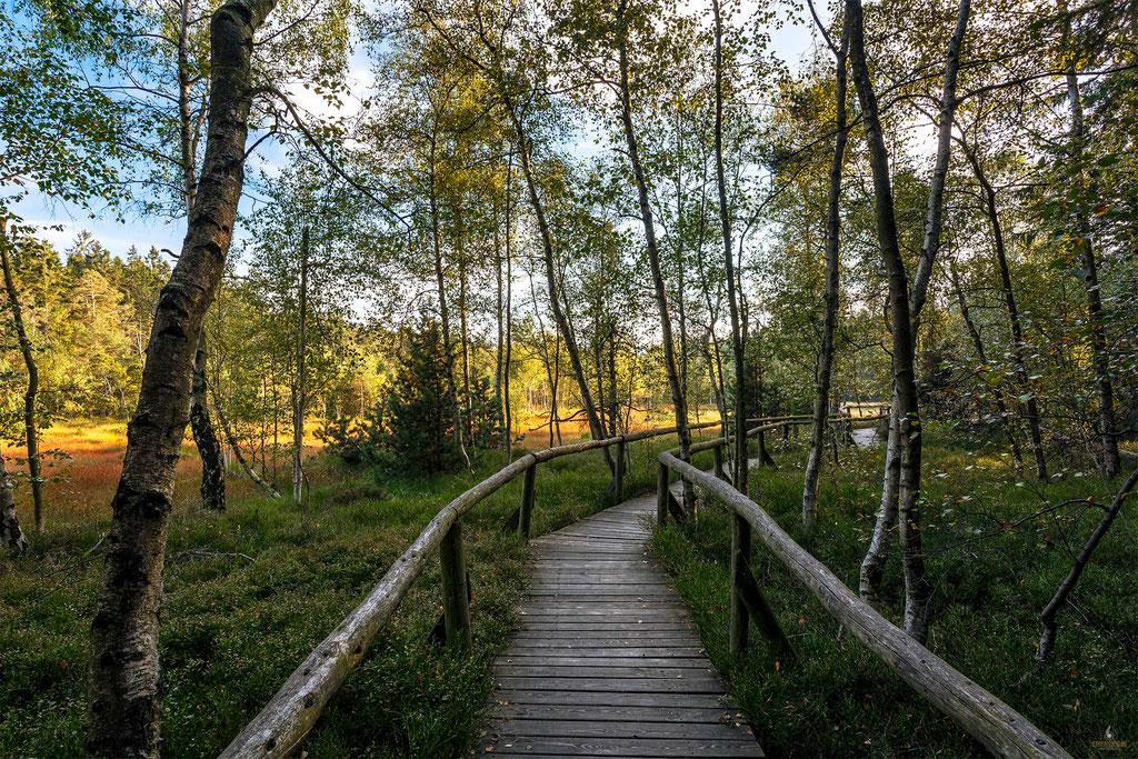 Weg zum Hormersdorfer Hochmoor