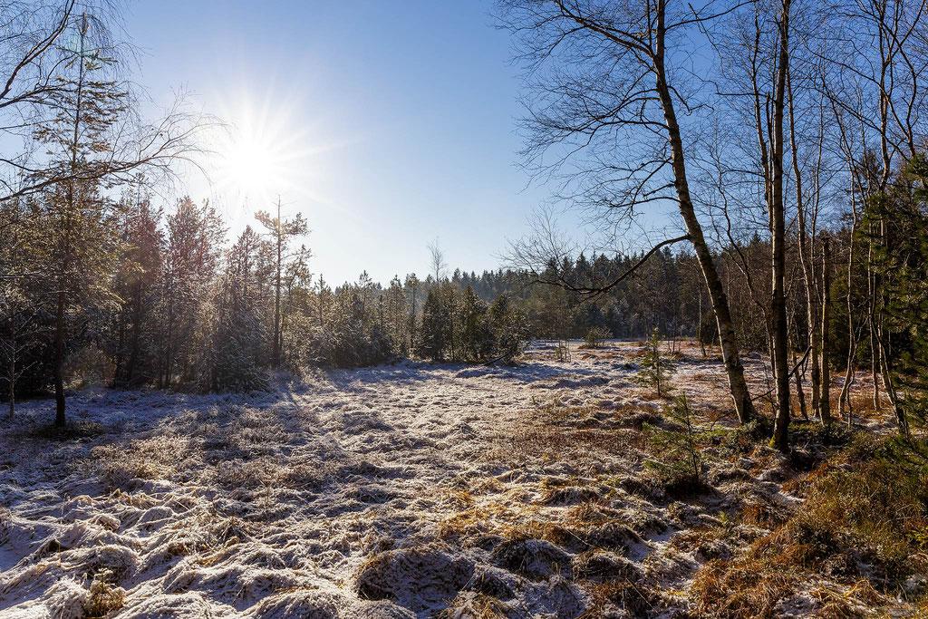 Winter am Hormersdorfer Hochmoor
