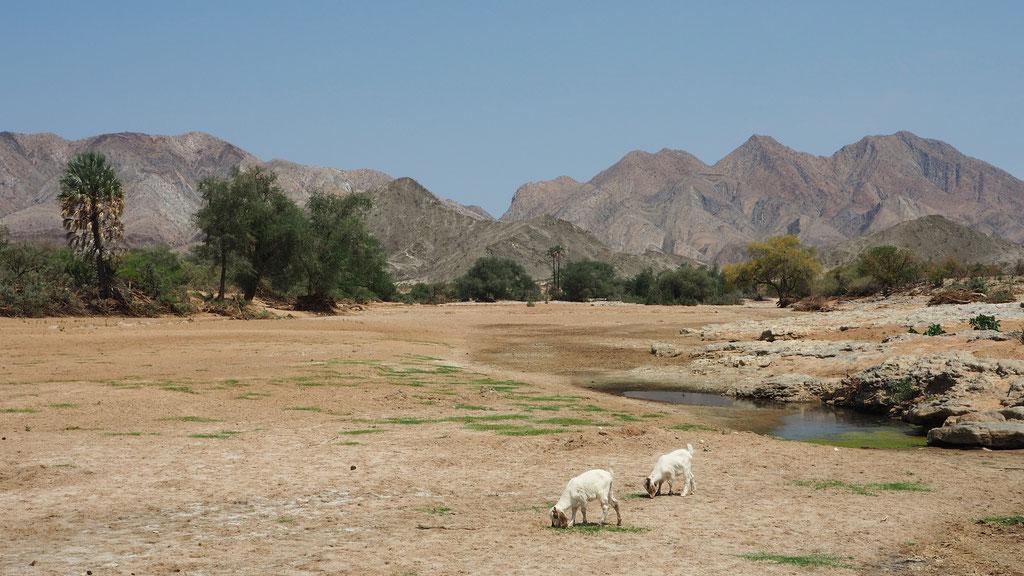 Vallée de la Hoarusib le long de la D3707 pour Opuwo ; Namibie