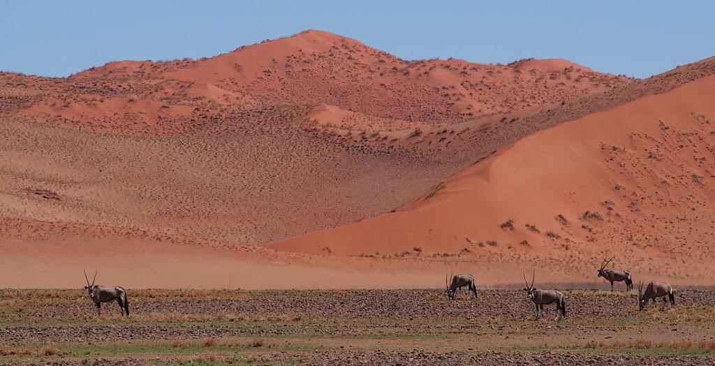 En route pour Sossusvlei ; Namibie
