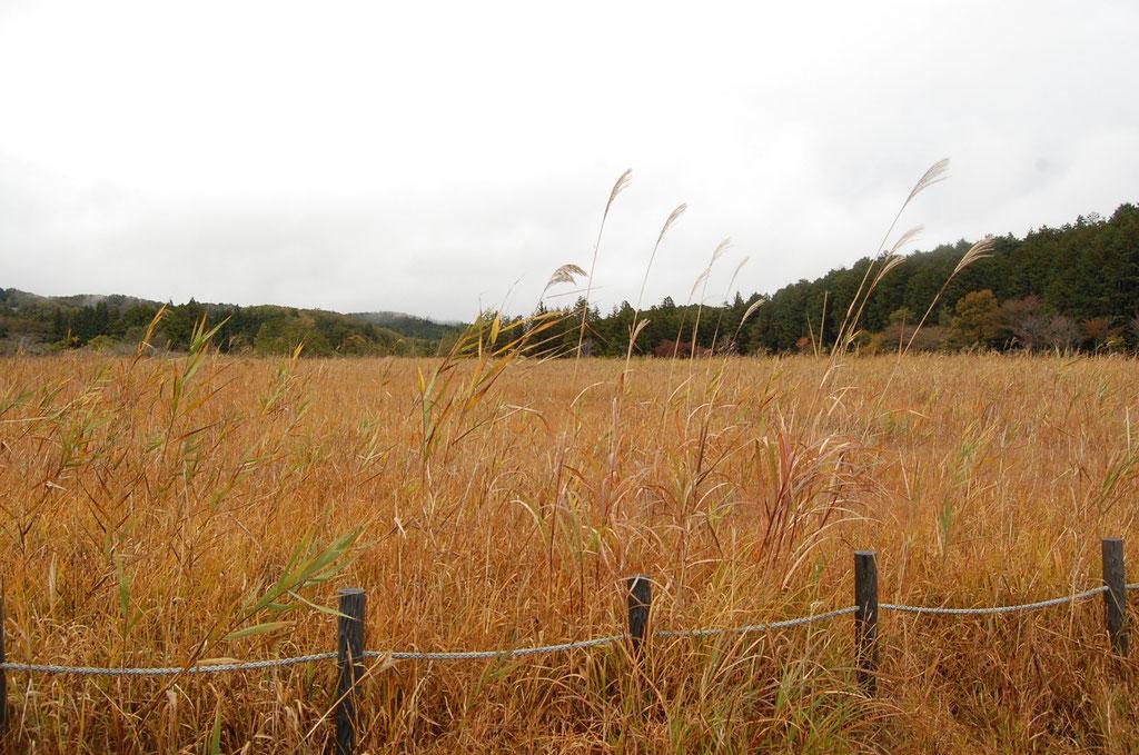長の山湿原