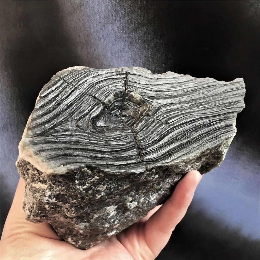 fossil 2020, soapstone carved, 2020