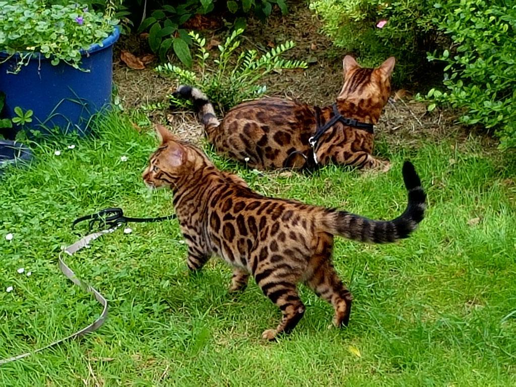 Ashanti und Polly im Garten