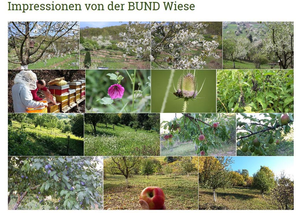 Screenshot der Homepage des BUND Ortsverbands Dossenheim