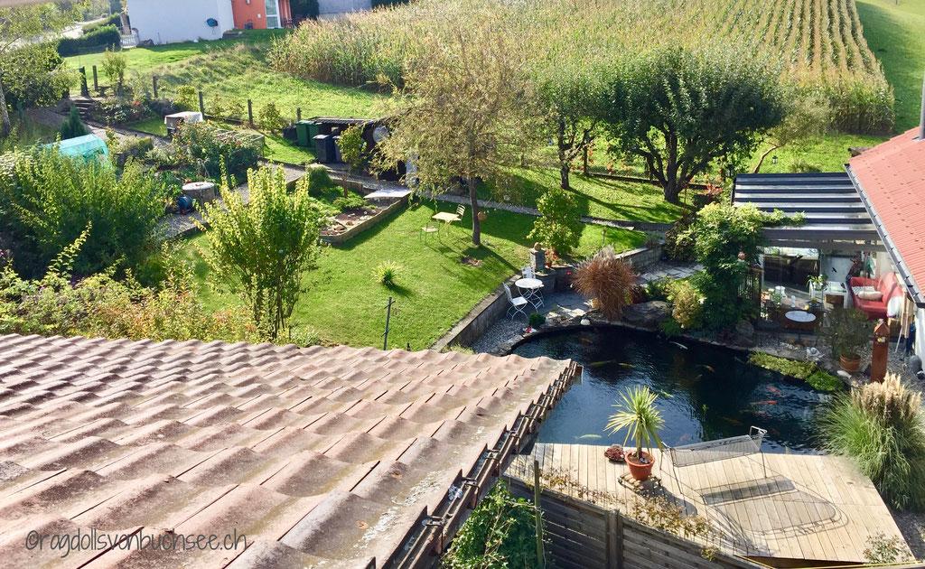 Freigehege / eingezäunter Garten