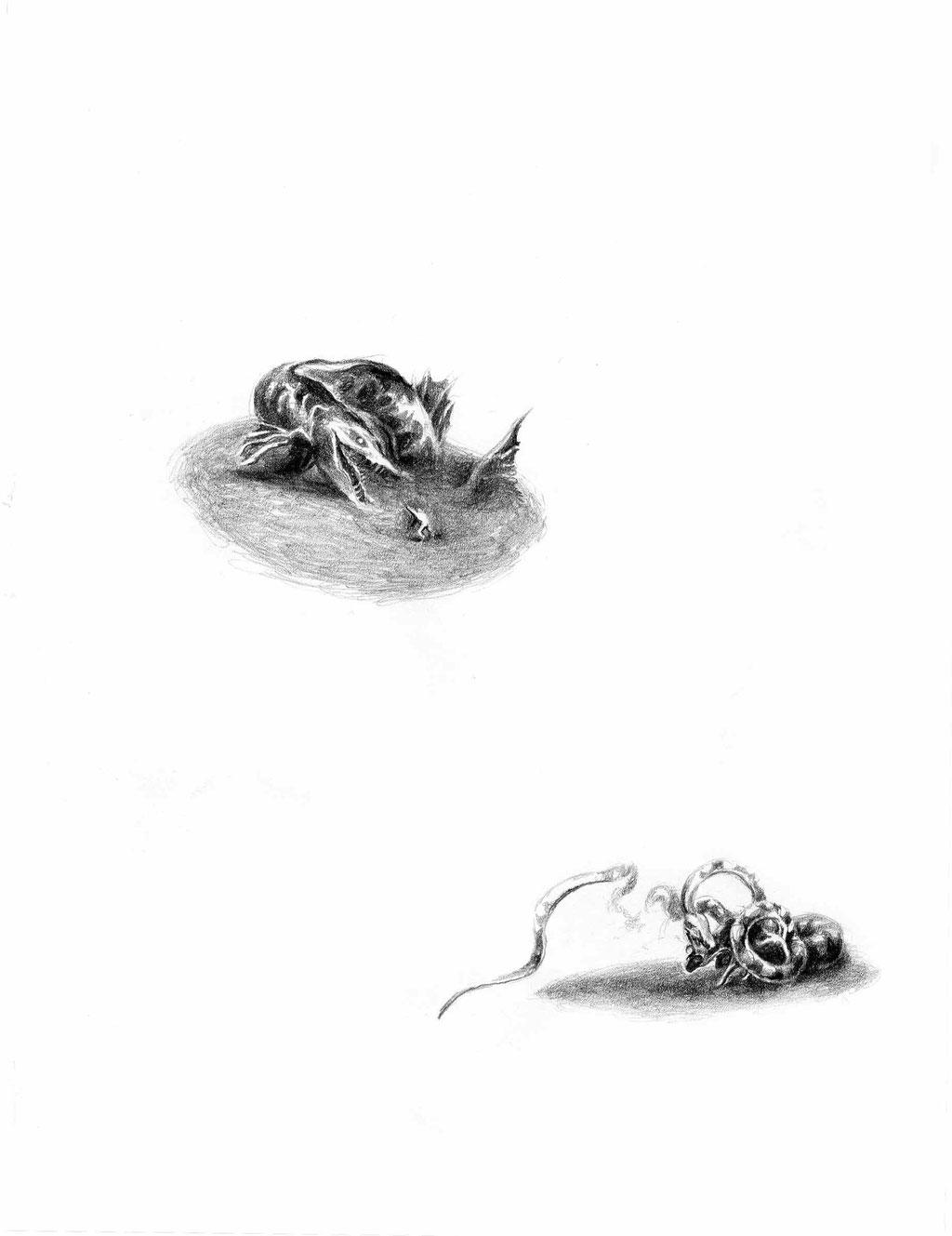 Matthias-Wyss-Dschungel-Erstes-Buch-2004-2005-Pencil-On-Paper-22x29Cm