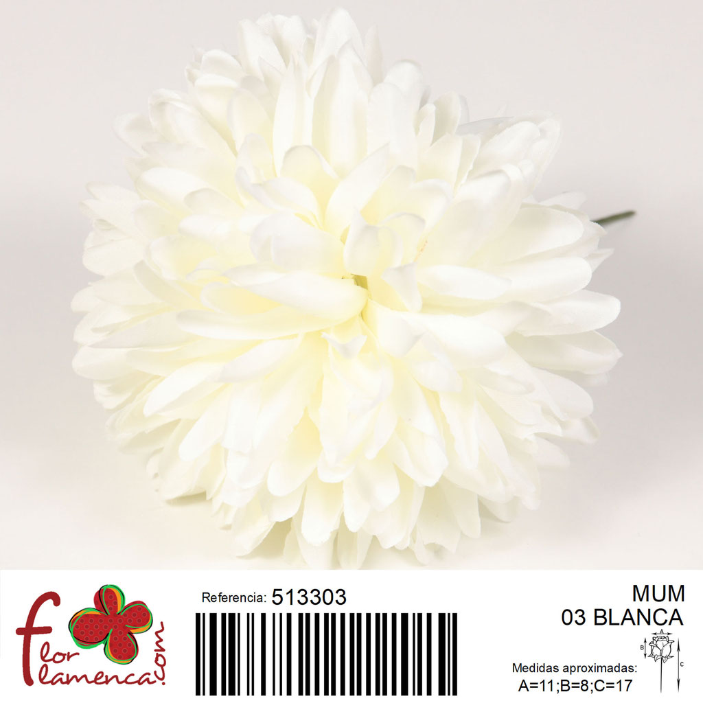 Crisantemo Flor Flamenca modelo Mum color blanco 03