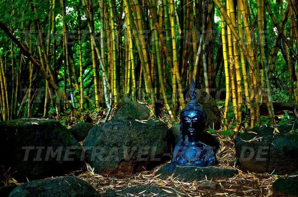 Bambusbuddha. Foto: E. Knipschild