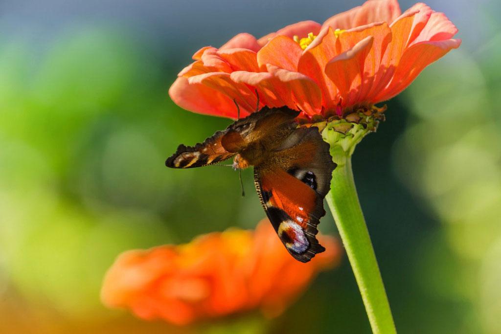 Unter der Blüte