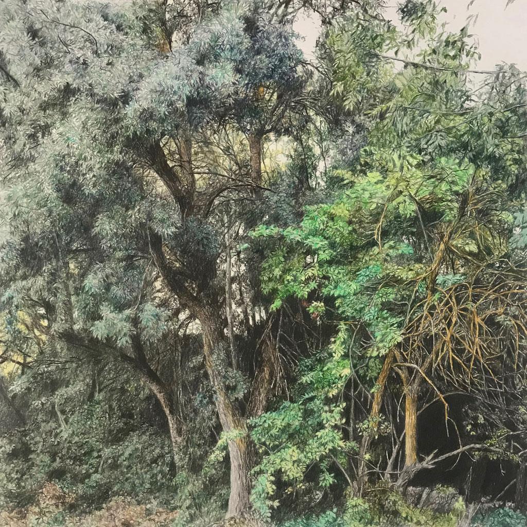 Lápices de colores sobre papel, 41 x 41 cm. Colección particular.