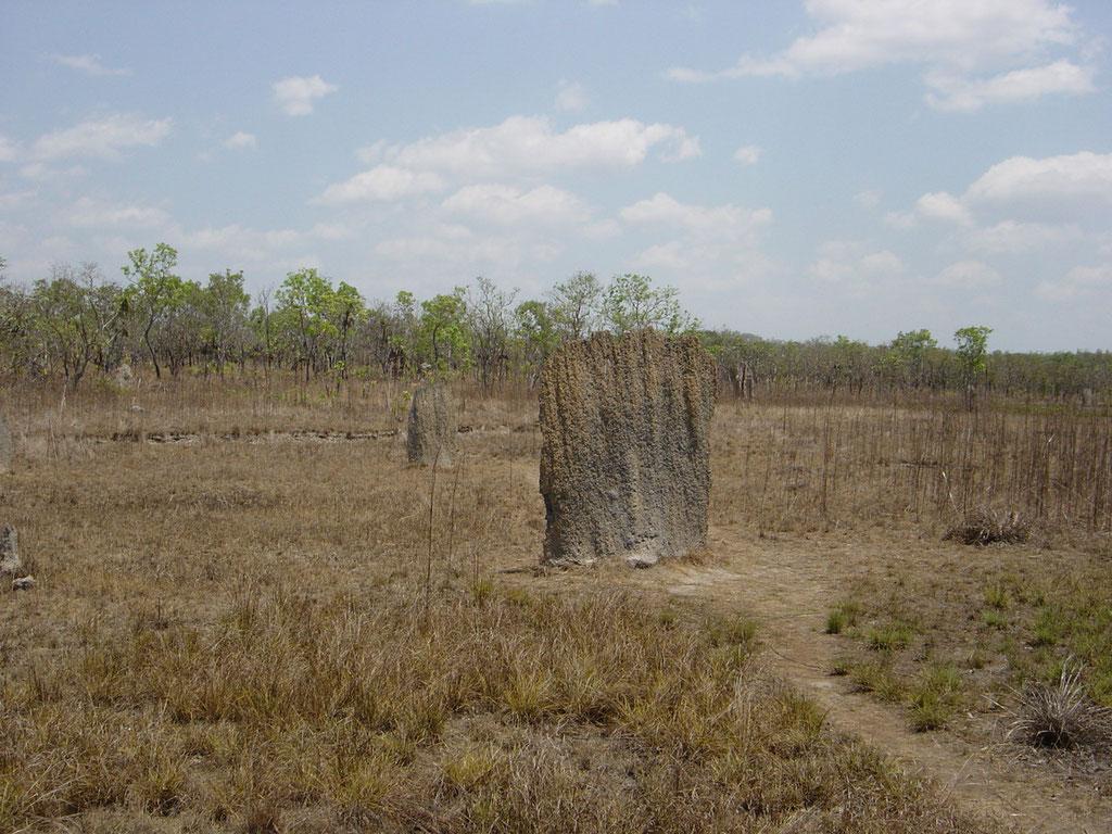 Magnetische Termitenbauten