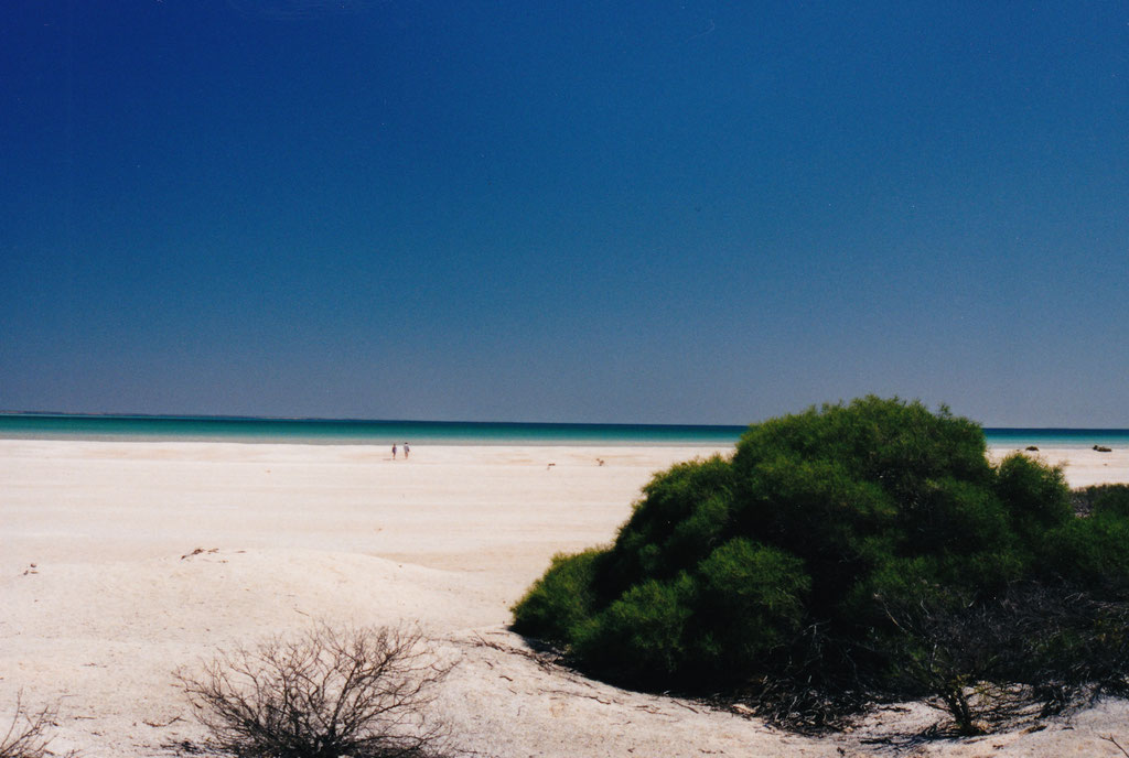 SHELL BEACH BEI HAMELIN POOL RESERVE