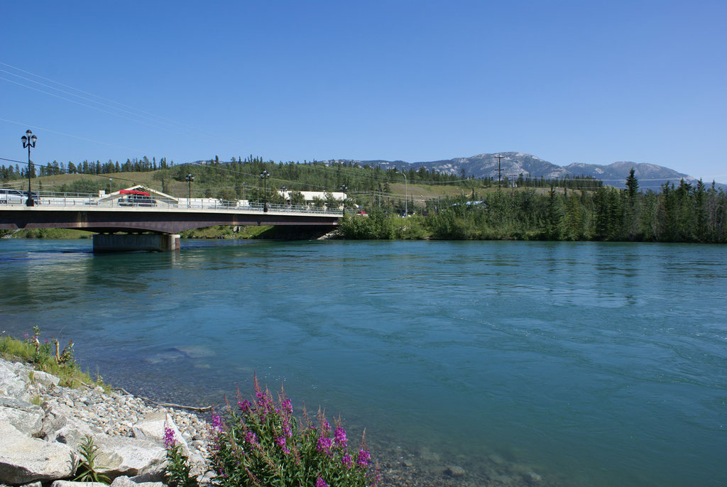 Yukon River in Whitehorse