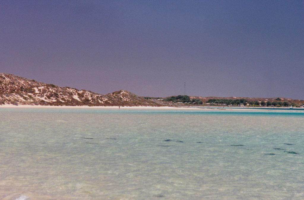 HAIFISCHE AN DER SHARK BAY