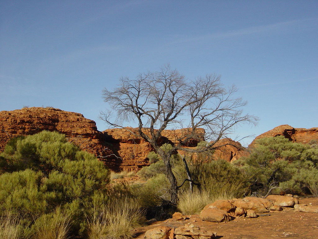 IM KINGS CANYON