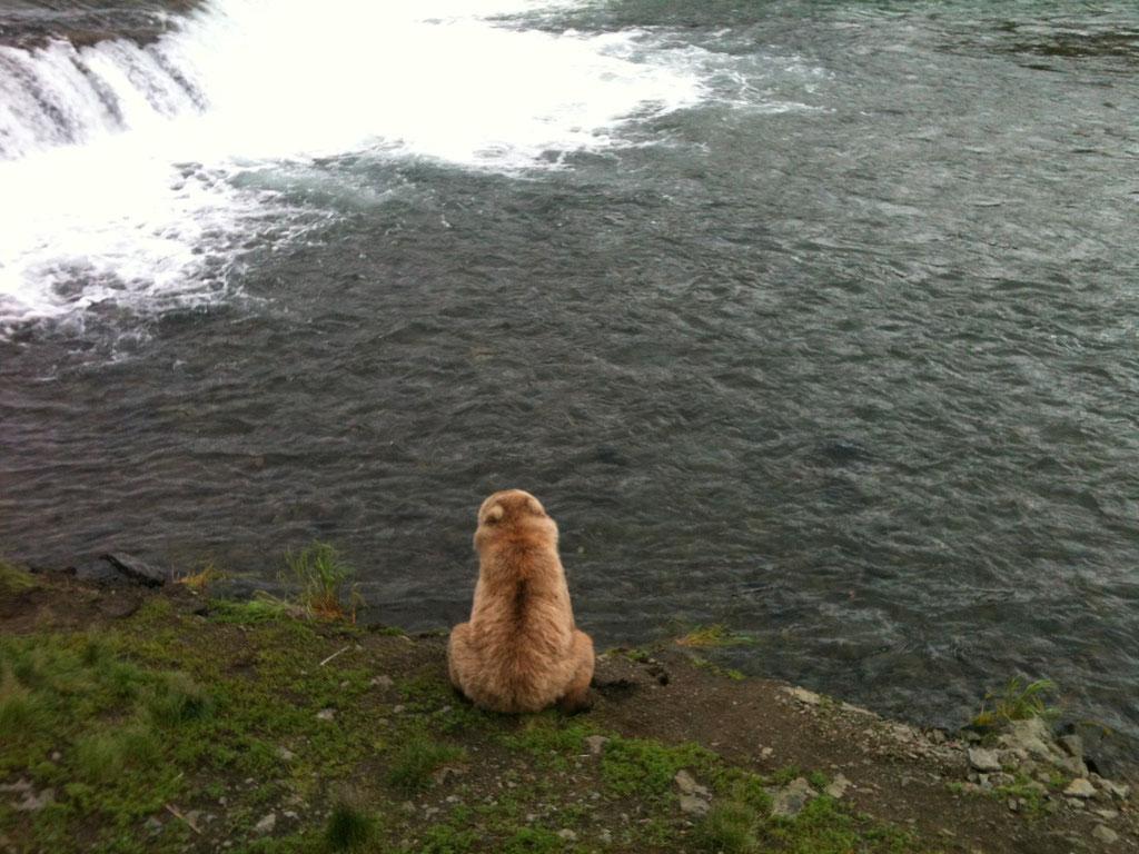 Warten auf den Lachs