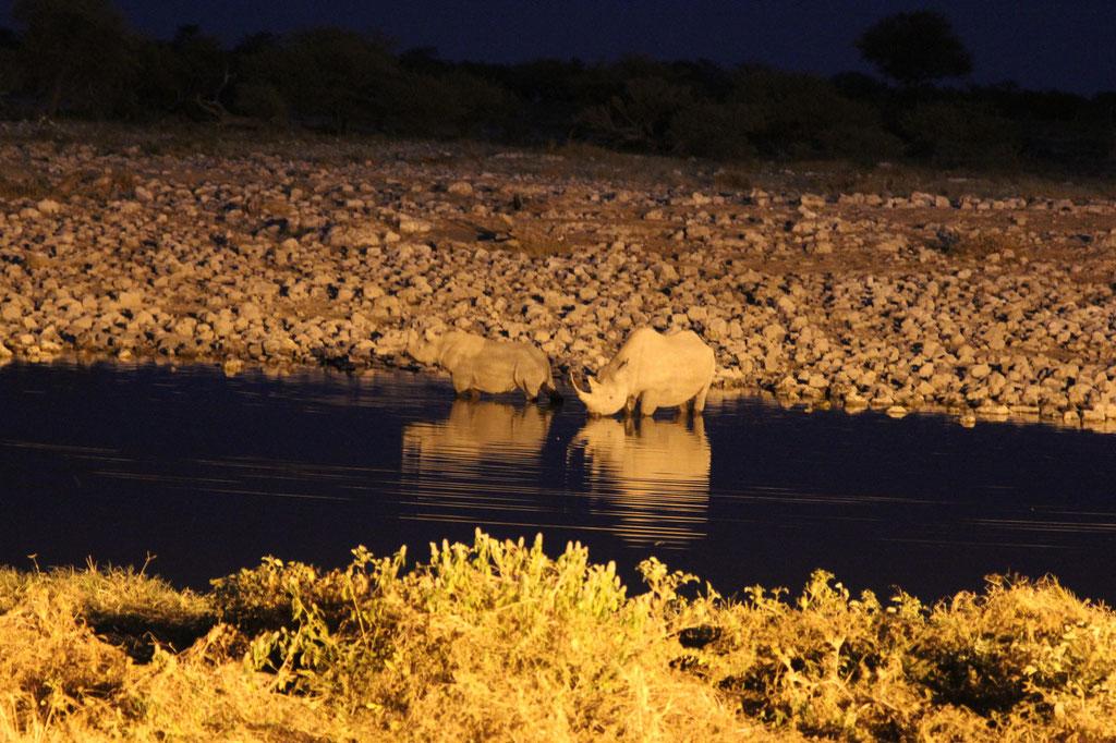 Nashornbesuch im Okaukuejo Wasserloch