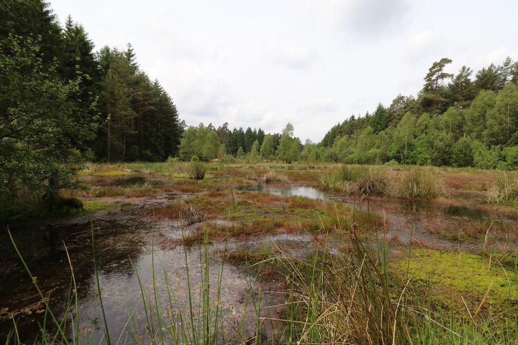 """Moorkomplex am """"Roten Wasser"""" westlich der Franzosenwiesen"""