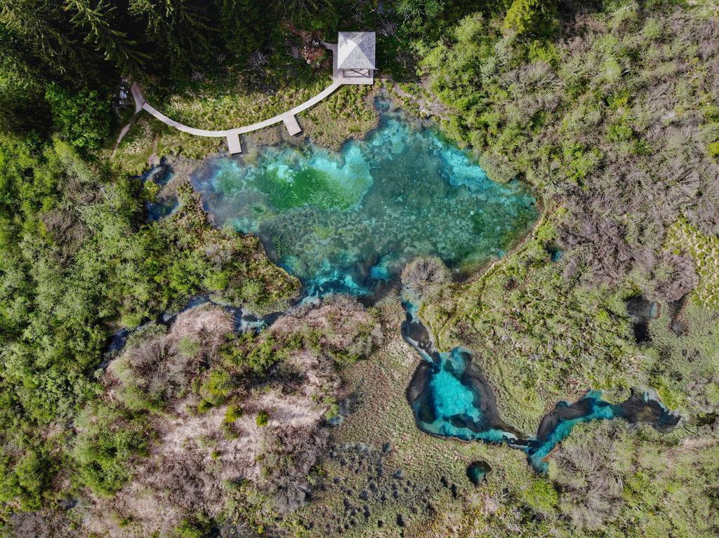 La réserve Zelenci.