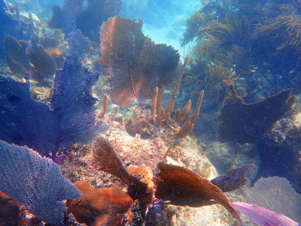 Corail, snorkling, SIAN KA AN
