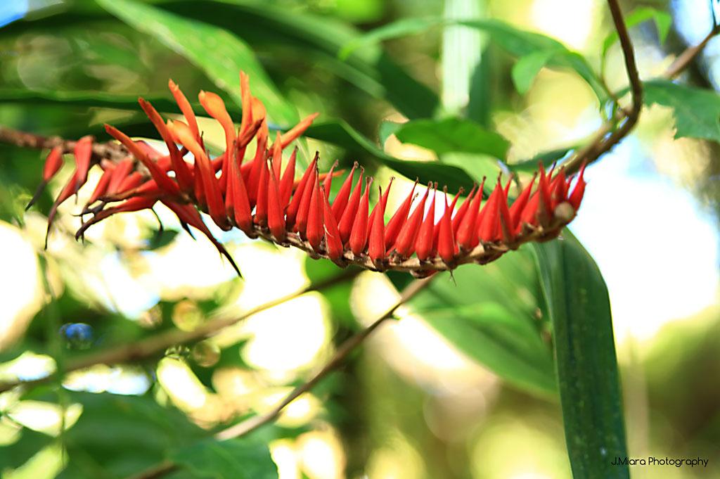 Flore de la reserve Santa Elena, MONTEVERDE
