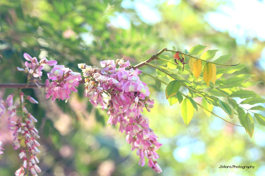 Flore du parc MANUEL ANTONIO