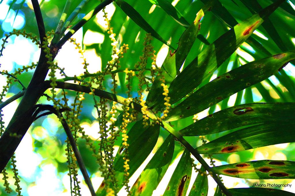 Flore de l'hotel Monteverde Inn, MONTEVERDE