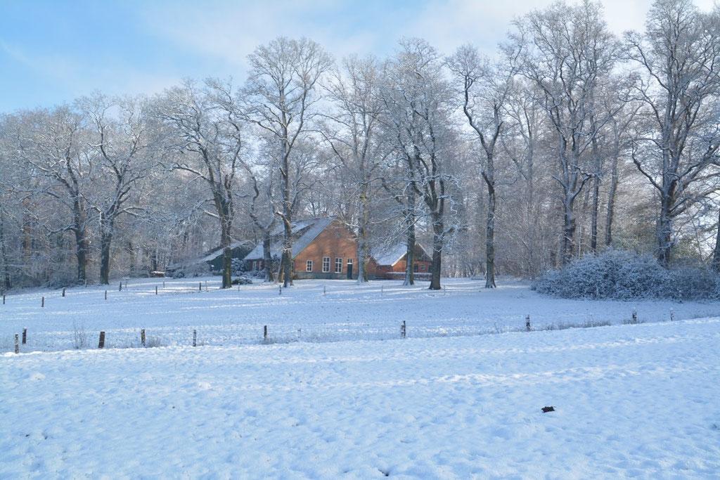 Duivendal in de winter