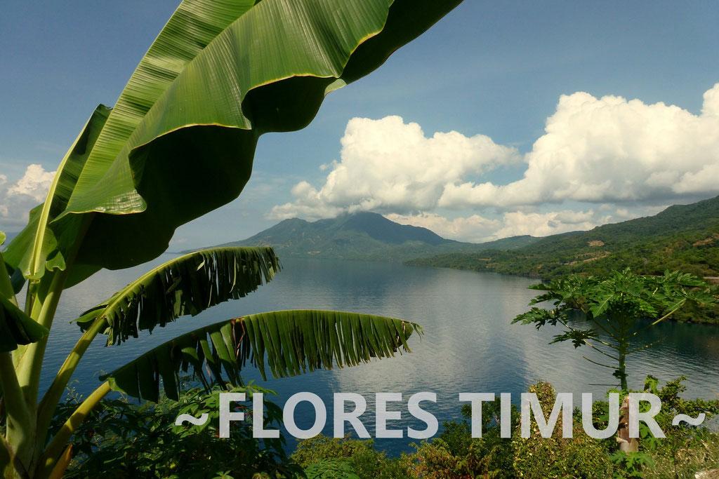 FLORES TIMUR