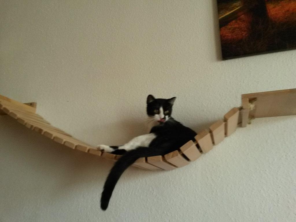 Hängematte Katze