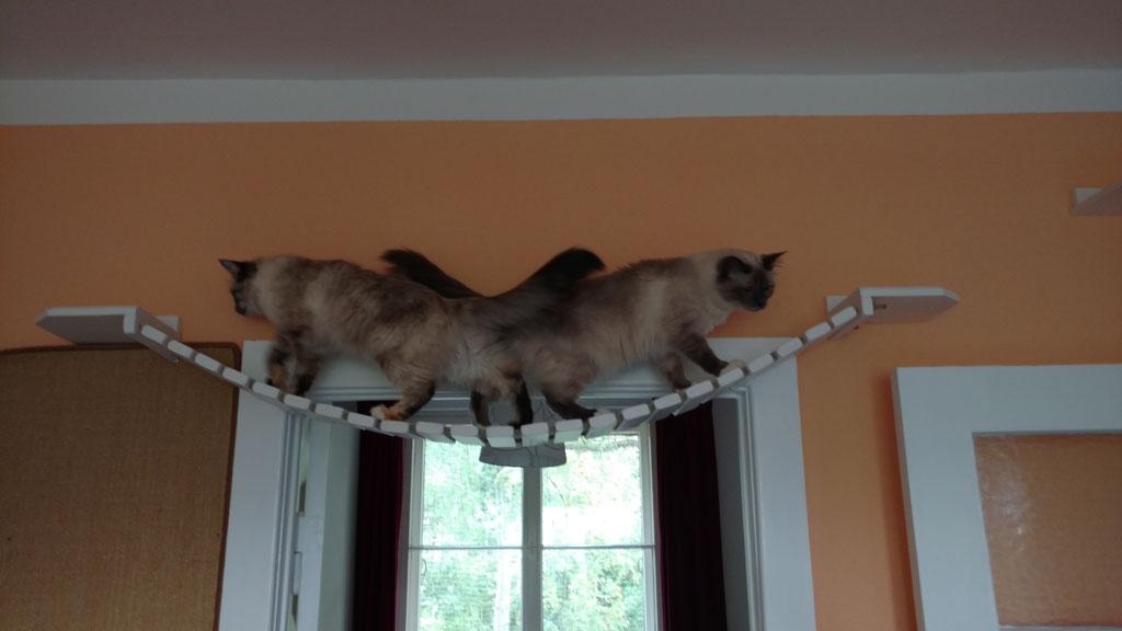 Katzen Wand