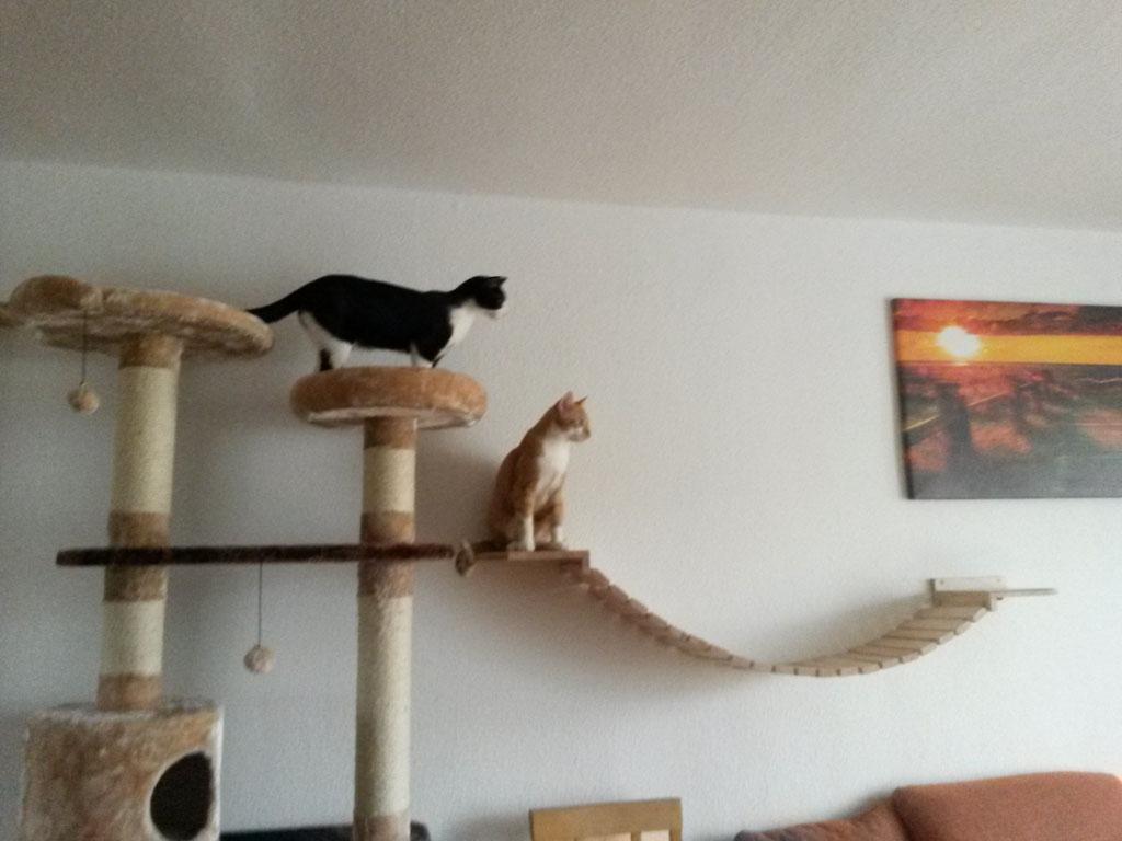 Katzen Kratzbaum Wand