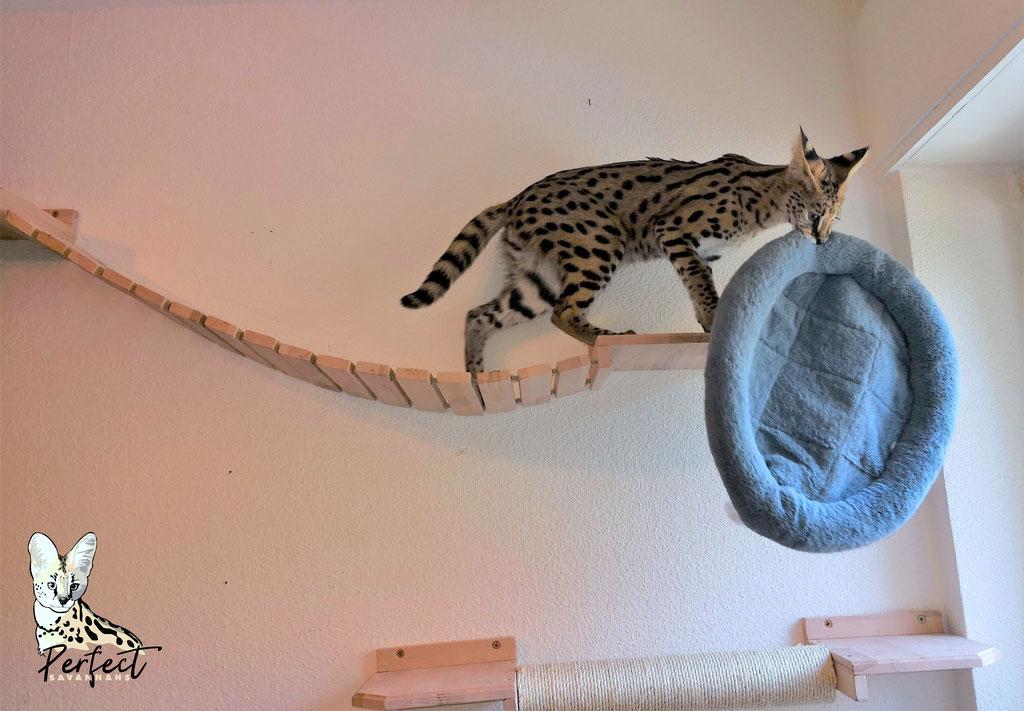Katzenbaum Für Große Katzen / Kratzbaum Für Die Wand