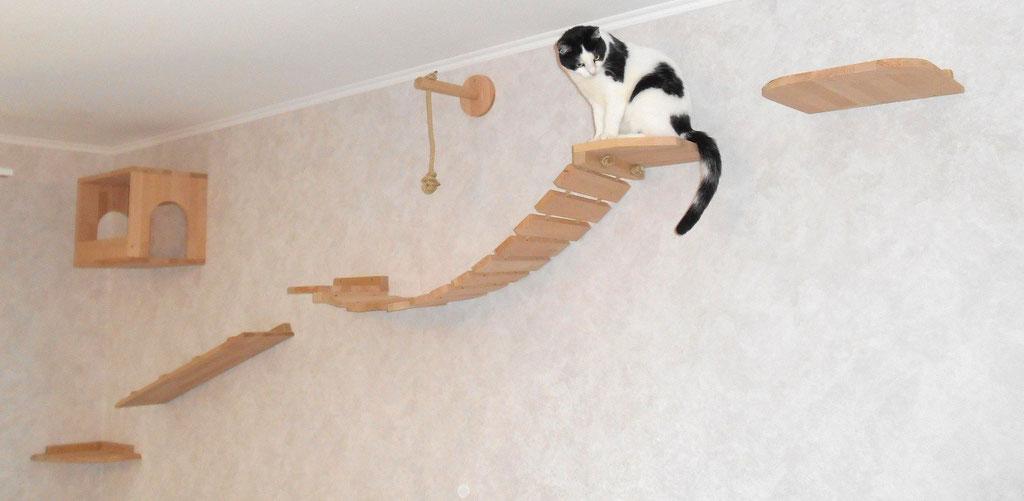 Wandpark Katze
