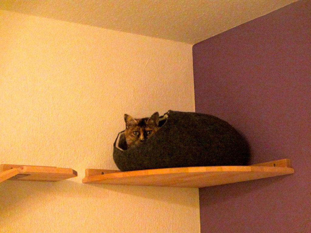 Ecke für katzen