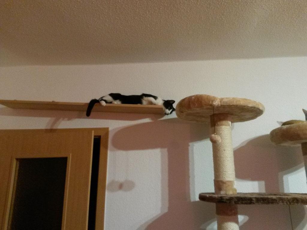 kundenbilder wandelemente f r katzen tolle katzen kletterwand kratzbaum f r katzen. Black Bedroom Furniture Sets. Home Design Ideas